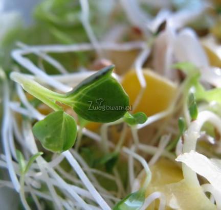 Sałatka z kiełkami i kukurydzą